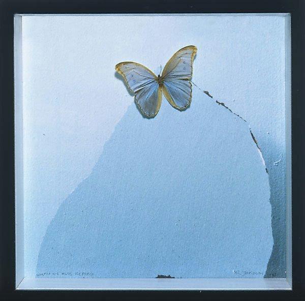 An image of Morpho on blue iceberg