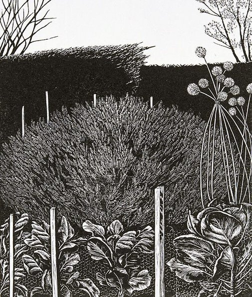 An image of Lavender by Rosalind Atkins