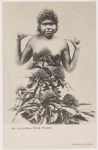 An image of An Australian wild flower by Unknown photographer, Kerry & Co