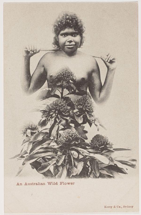 An image of An Australian wild flower