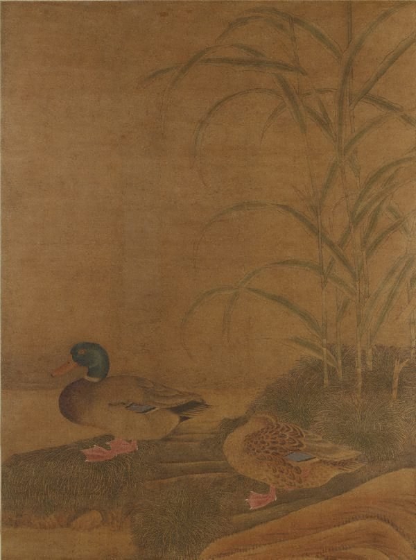 An image of Ducks and reeds
