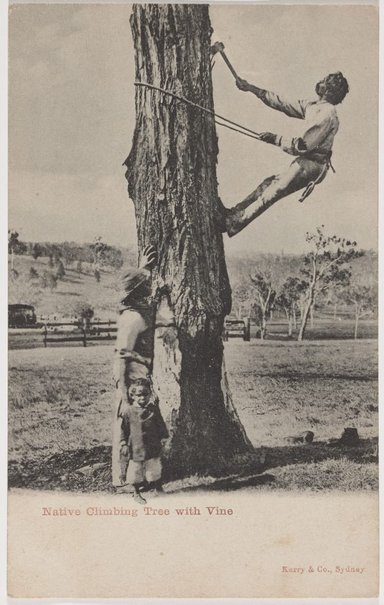 An image of Native climbing tree with vine by Unknown photographer, Kerry & Co