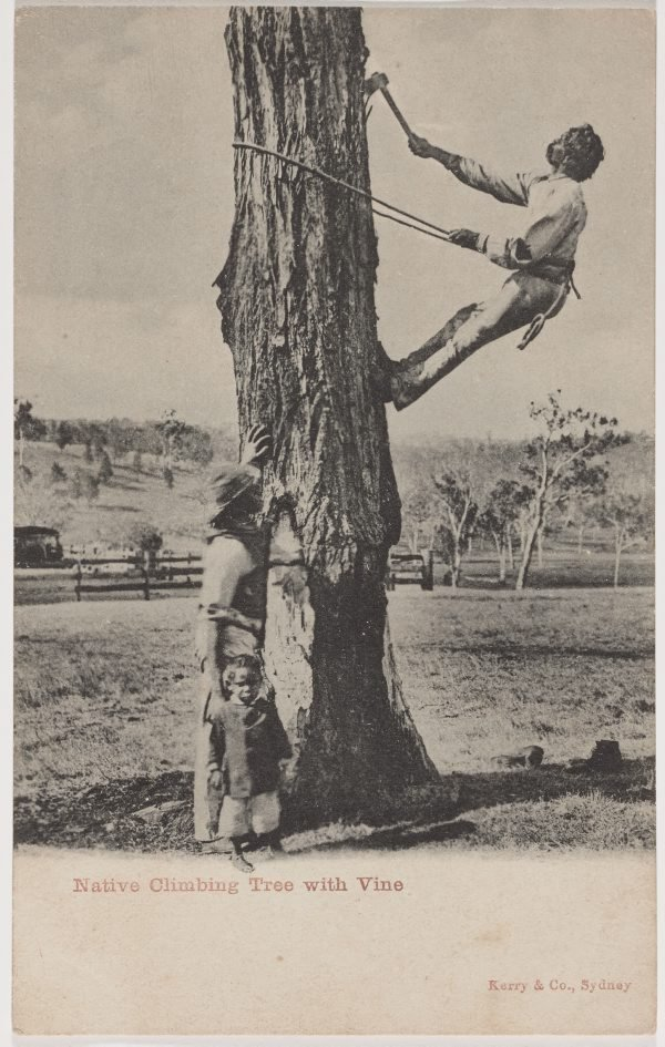 An image of Native climbing tree with vine