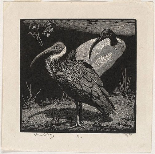 An image of Ibis (Pensive) by Lionel Lindsay