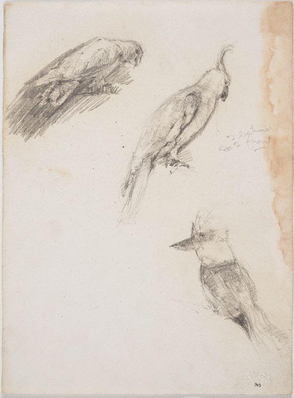 An image of Galah, cockatoo and kookaburra