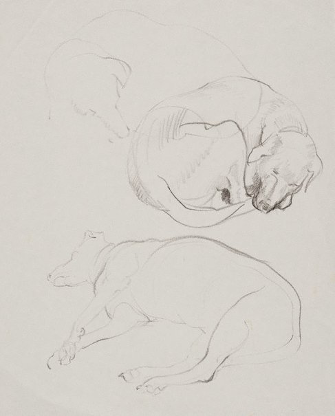An image of (Studies of sleeping dog) by Mary Abbott