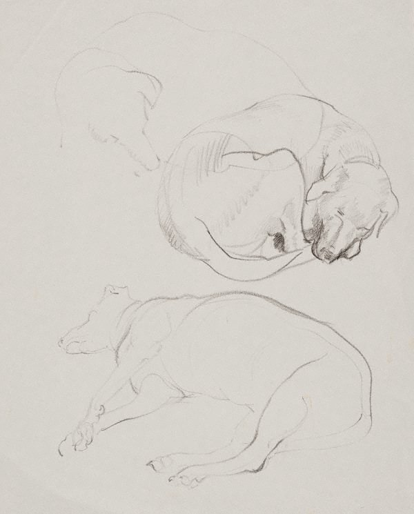 An image of (Studies of sleeping dog)