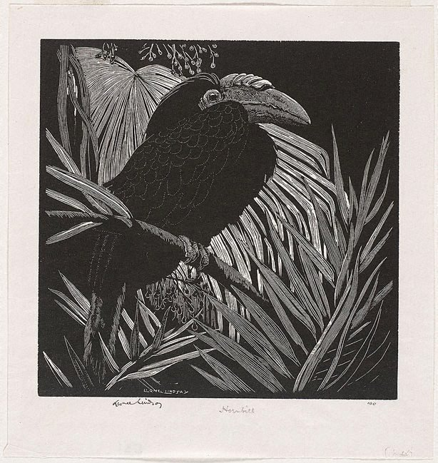 An image of Hornbill