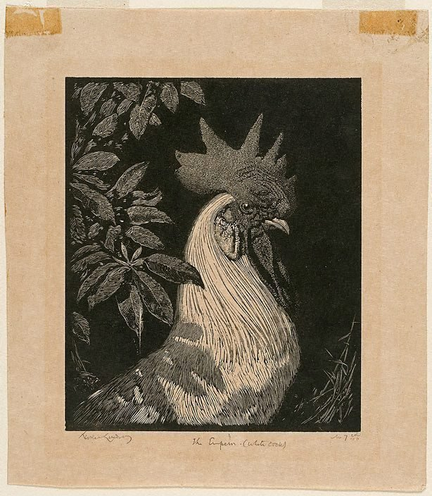 An image of The Emperor (The white cock)