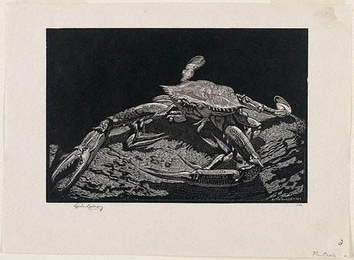 An image of The crab by Lionel Lindsay