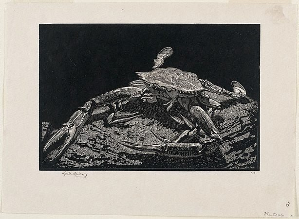 An image of The crab