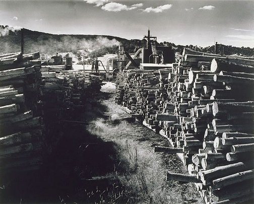 An image of Pyneboard Factory, Tumut, New South Wales (3) by Max Dupain