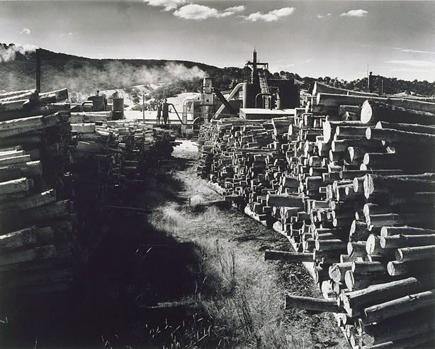 AGNSW collection Max Dupain Pyneboard Factory, Tumut, New South Wales (3) (1977, printed 1983) 54.1987