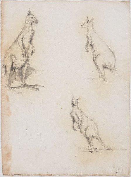An image of recto: Kangaroos verso: Banana trees and Cockatoo by Lloyd Rees