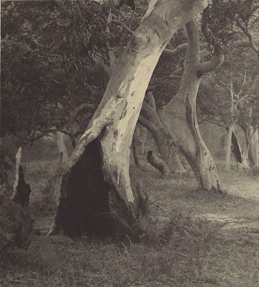 An image of The witches' woods by Henri Mallard