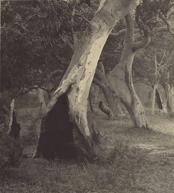 An image of The witches' woods