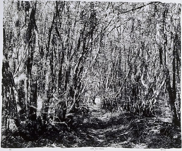 An image of Into the wood