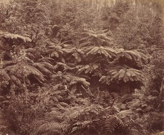 AGNSW collection Unknown photographer, Anson Bros Studio Fern Tree Gully, Hobart Town, Tasmania (1887) 568.2014