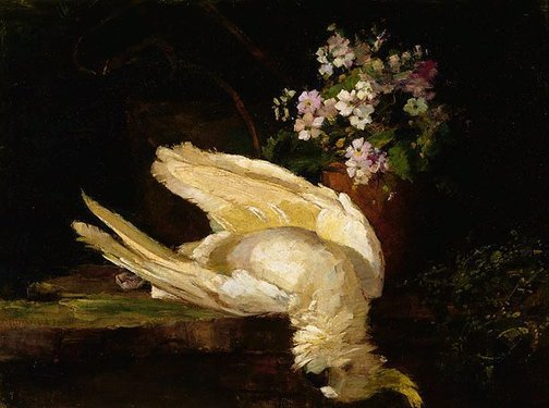 An image of The cockatoo by Margaret Fleming