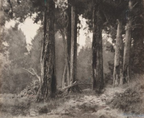 An image of Path through the wood, Kangaroo Valley by Norman C Deck