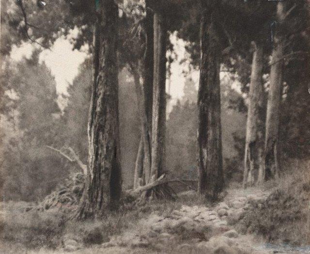 An image of Path through the wood, Kangaroo Valley
