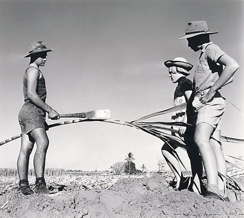 An image of Children of the Pearce family, Burdekin District, Queensland by Max Dupain