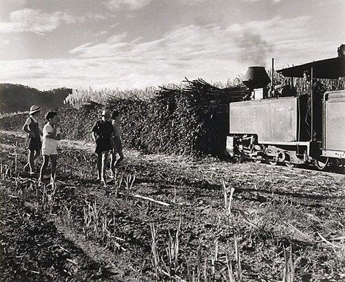 An image of Cane train, Burdekin District, Queensland by Max Dupain