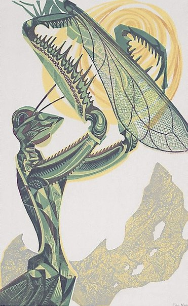 An image of Mantis in the sun by Eileen Mayo