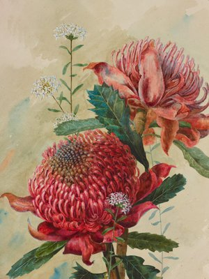 Alternate image of Waratahs by Margaret Lilian Flockton