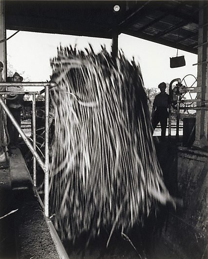 An image of Unloading cane, Queensland