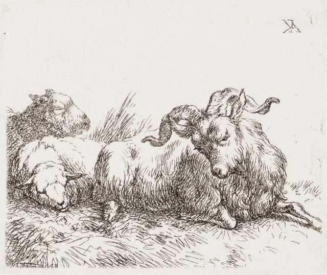 An image of A goat and two sheep lying down