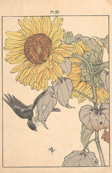 An image of Sunflower and Yellow bunting by Imao Keinen