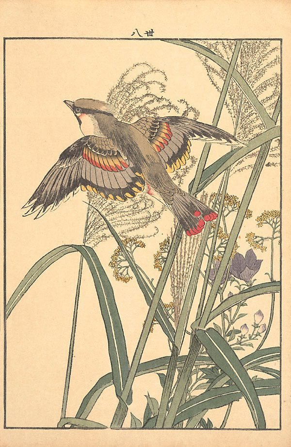 An image of Susuki grass, Chinese bellflowers, patrinia and waxwing
