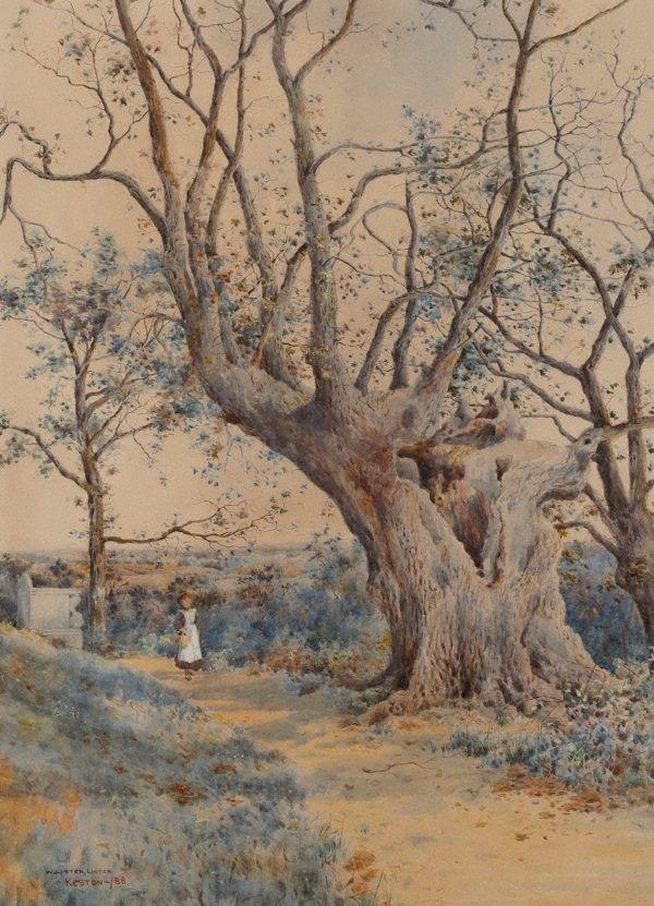 An image of Wilberforce oak