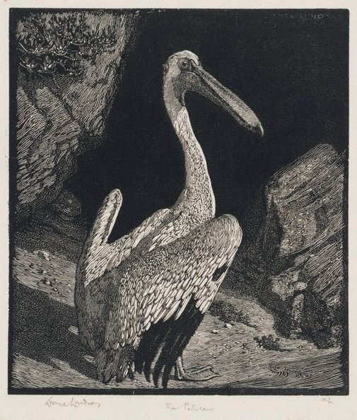An image of The pelican by Lionel Lindsay
