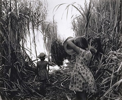 An image of Burning cane, Burdekin District, Queensland by Max Dupain