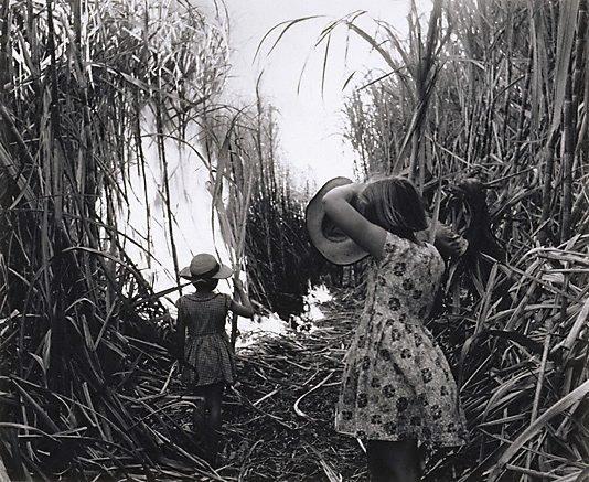 An image of Burning cane, Burdekin District, Queensland
