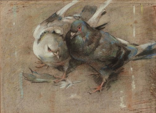 An image of Pigeons by Septimus Power