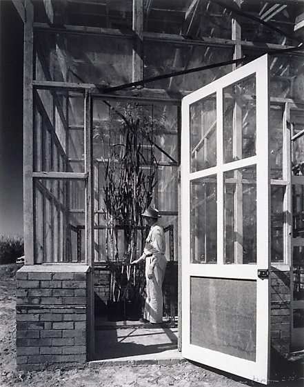 An image of Man in glasshouse, open door, Queensland