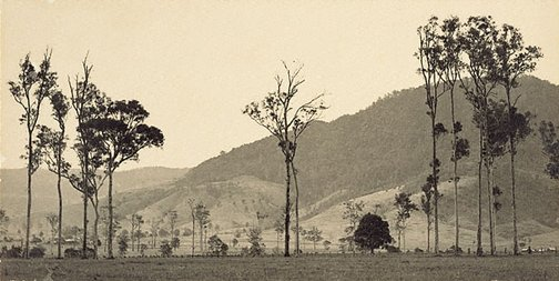 An image of Cambewarra Mountain, New South Wales by Harold Cazneaux