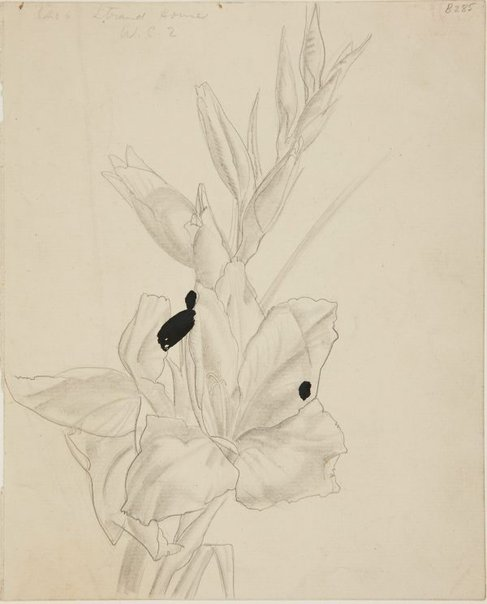 An image of (Flower study) (London genre) by William Dobell