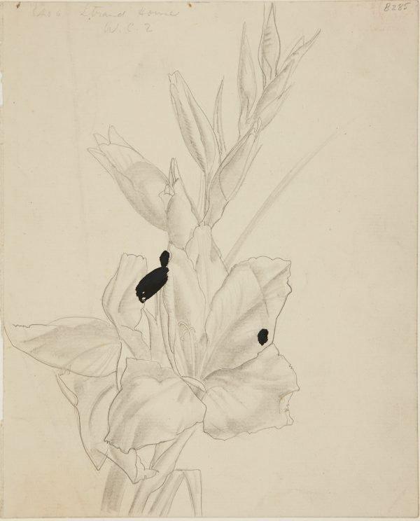 An image of (Flower study) (London genre)