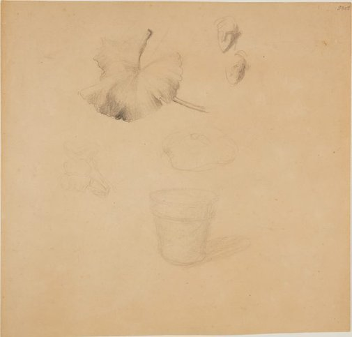 An image of (Face studies, leaf and flower pot) (London genre) by William Dobell