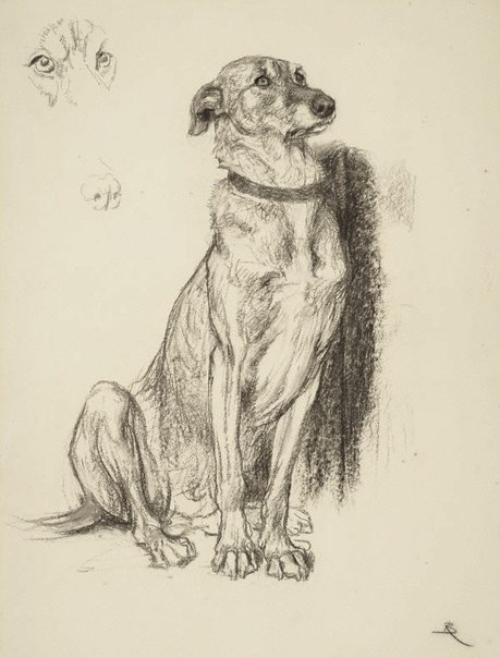 An image of Study for the dog in 'Requiescat' by Briton Rivière