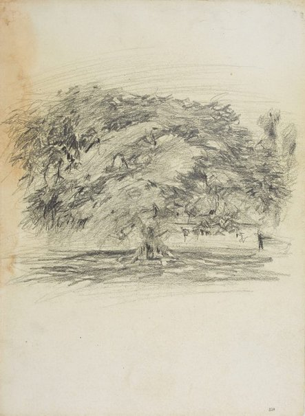 An image of Spreading tree by Lloyd Rees