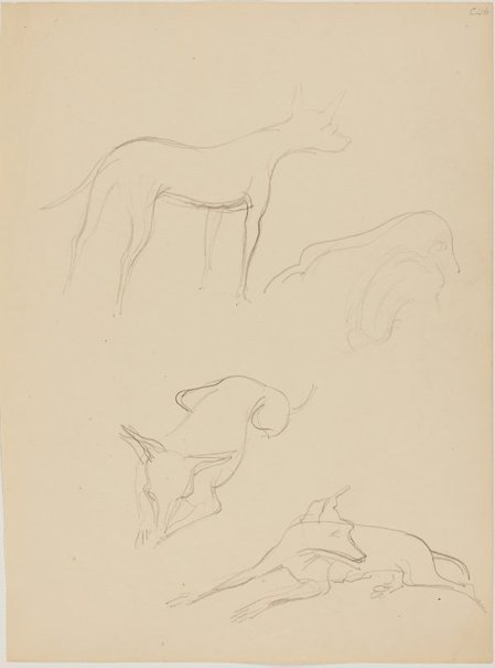 An image of (Dog studies) (Early Sydney period) by William Dobell