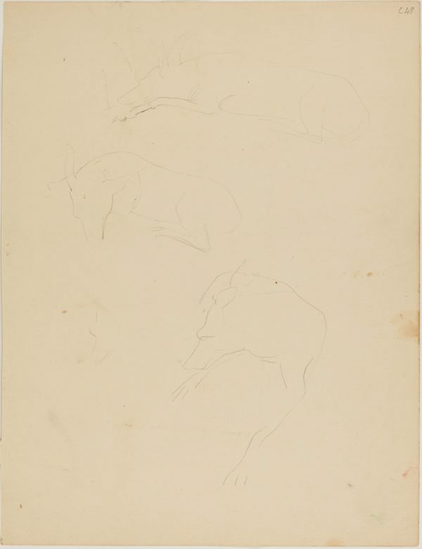 An image of (Dog studies) (Early Sydney period)