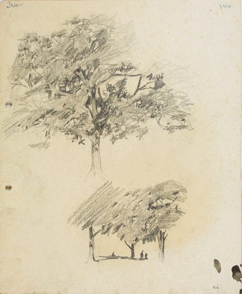 An image of recto: Trees verso: Tree in landscape by Lloyd Rees