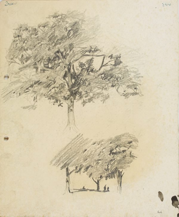An image of recto: Trees verso: Tree in landscape