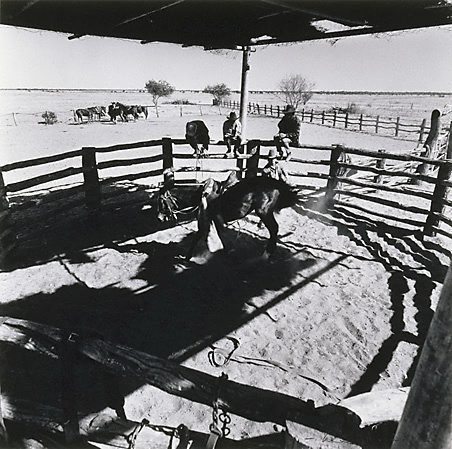 An image of Breaking-in, 'Canobie', North Queensland by Max Dupain